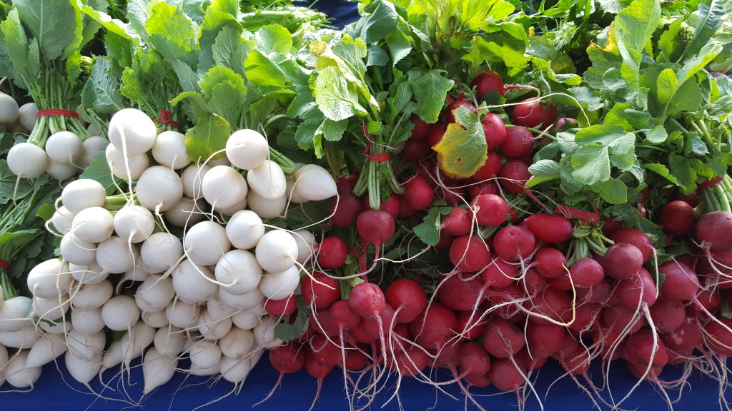 Japanese turnips and radishes from The Garden Of... the garden of... The Garden Of... 20160124 090723
