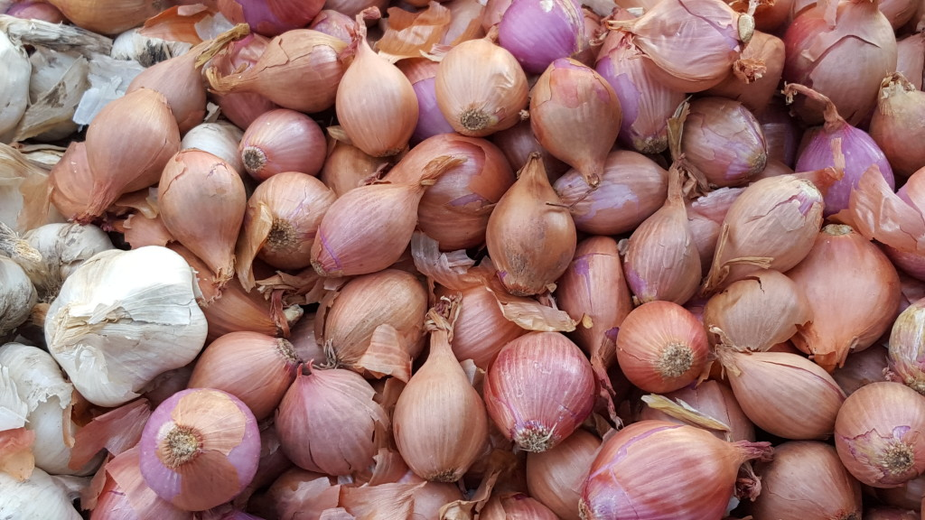 Shallot central, with a few garlic cloves playing tourist. T&D Farms T&D Farms 20160214 090429