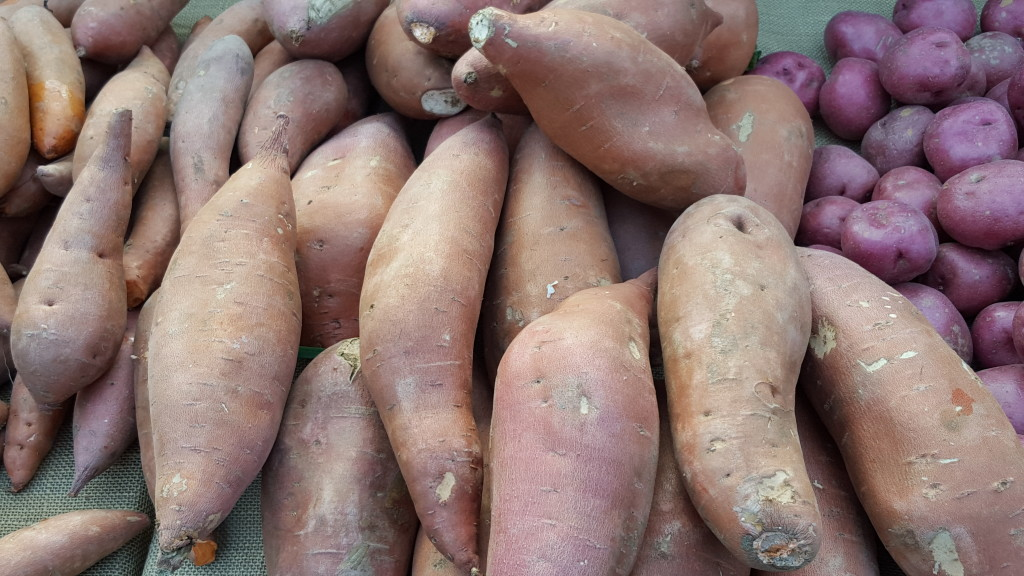There are lots of potatoes, ranging from Red Rose (far right corner) to sweet potatoes (center/left) and Yukon Gold (below). T&D Farms T&D Farms 20160214 090750